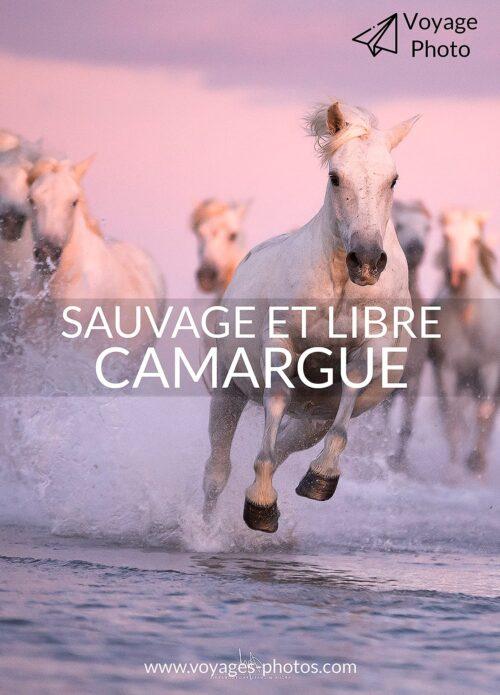 sauvage et libre en camargue - un voyage photo extraordinaire