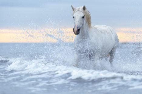 Camargue et chevaux sauvages
