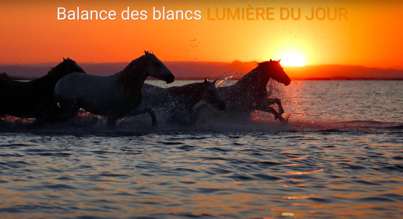 Comment photographier chevaux Camargue